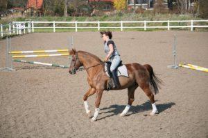 Glückliches Pferd - glücklicher Reiter 2